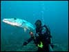 Dolphin Sun Charters | South Florida | Best Scuba Diving | Best Dive Charter Boynton Beach, Florida