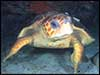 Dolphin Sun Charters | South Florida | Best Scuba Diving | Turtles