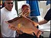 Dolphin Sun Charters | South Florida | Best Scuba Diving | Huge Hogfish